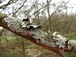 How do you tell the difference between a lichen vs. a moss? This simple description will make identifying them a breeze!