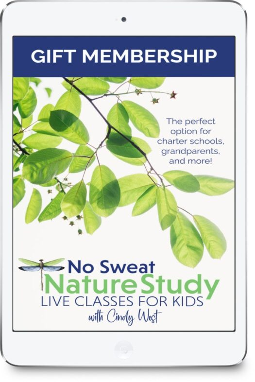 Yes, you can gift a membership to No Sweat Nature Study LIVE! The recipient's family will be so blessed by the twice-monthly, live, interactive science classes with Mrs. Cindy!