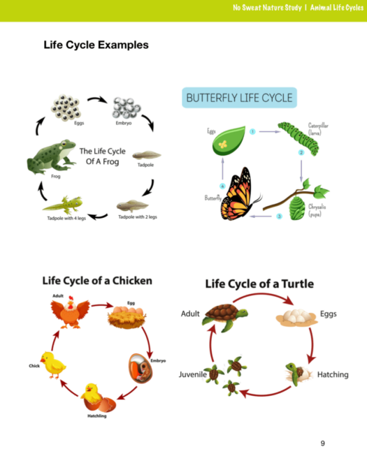 This Nature Study is great for multiple ages!