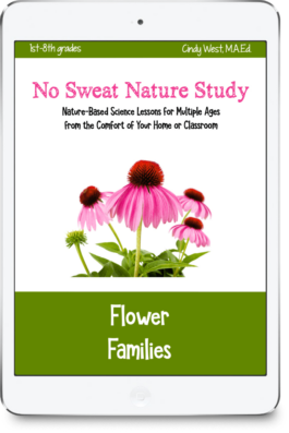 Flower Families curriculum is great for multiple age levels