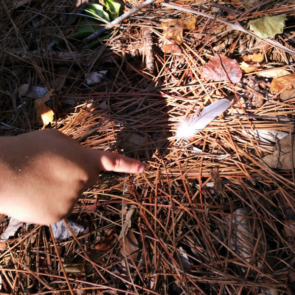 A day in the life of an animal signs nature study. #homeschool #naturestudy