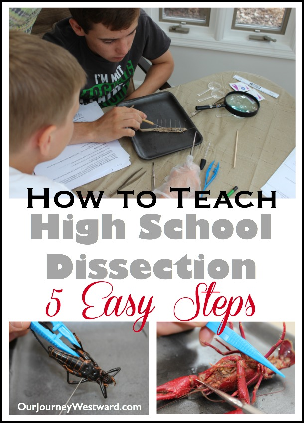 Five easy steps to teach high school dissection at home.