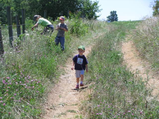 Wild Blackberry Walk
