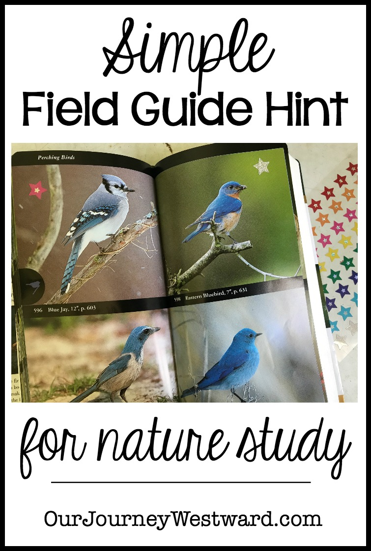 Simple Field Guide Hint