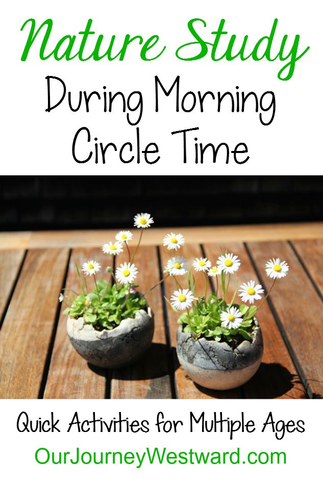 A wonderful list of quick activities to do for nature study during morning time!